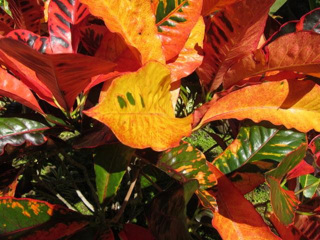 6. foliage