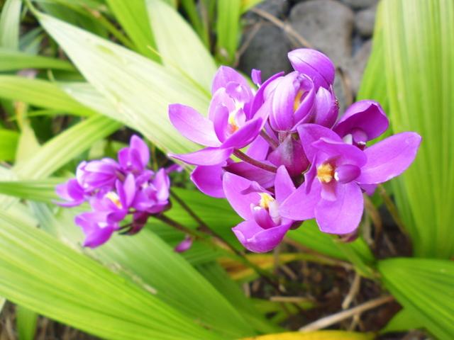 8. flowers